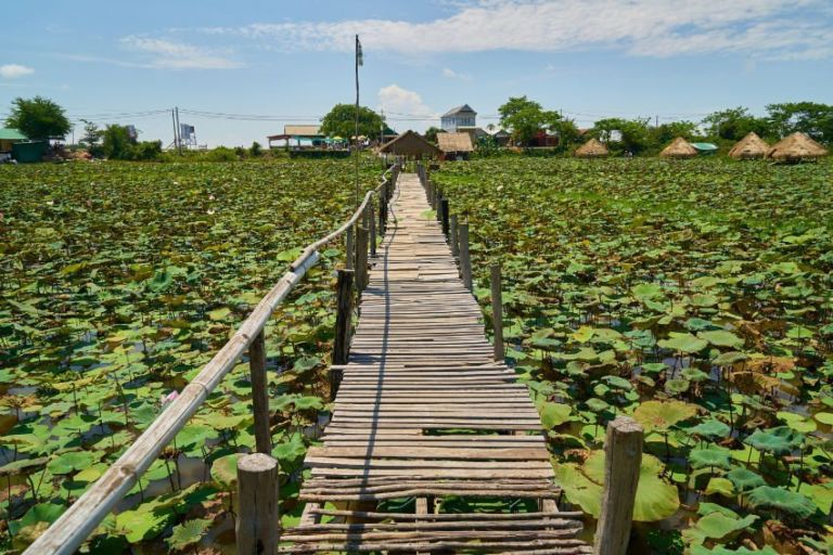 Lotus Plantation in Cambodia